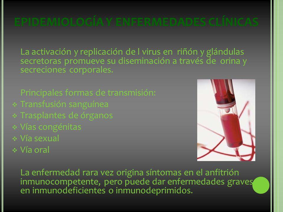 EPIDEMIOLOGÍA Y ENFERMEDADES CLÍNICAS La activación y replicación de l virus en riñón y glándulas secretoras promueve su diseminación a través de orin
