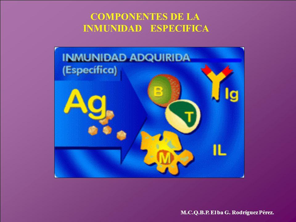 COMPONENTES DE LA INMUNIDAD ESPECIFICA M.C.Q.B.P. El ba G. Rodríguez Pérez.
