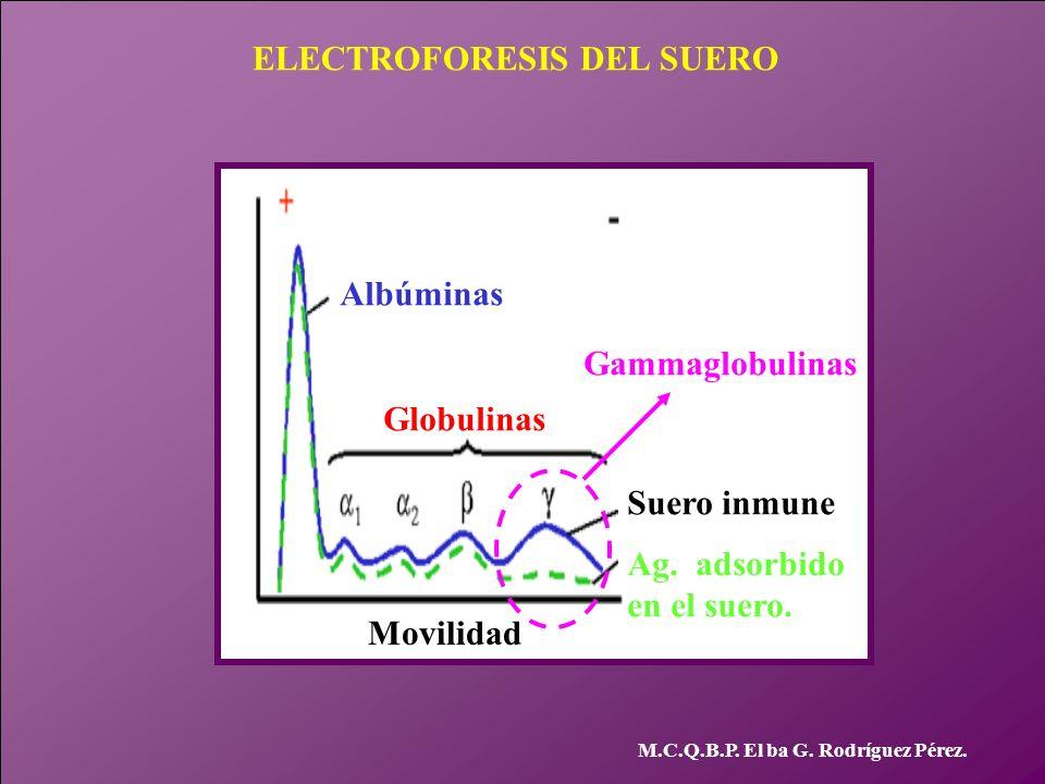 ELECTROFORESIS DEL SUERO M.C.Q.B.P. El ba G. Rodríguez Pérez. Albúminas Globulinas Suero inmune Ag. adsorbido en el suero. Gammaglobulinas Movilidad