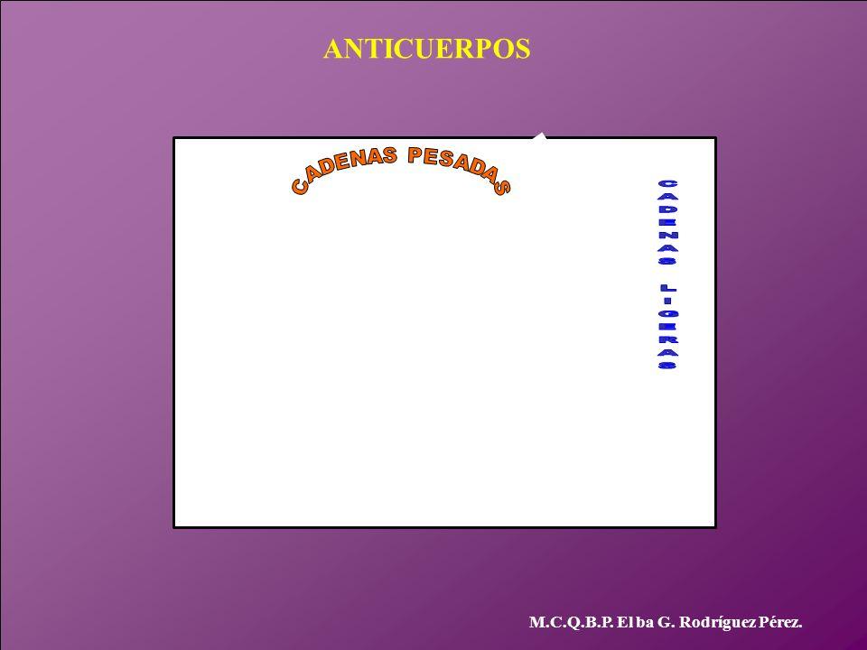 ANTICUERPOS M.C.Q.B.P. El ba G. Rodríguez Pérez.