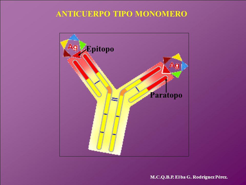 ANTICUERPO TIPO MONOMERO M.C.Q.B.P. El ba G. Rodríguez Pérez. Paratopo Epitopo