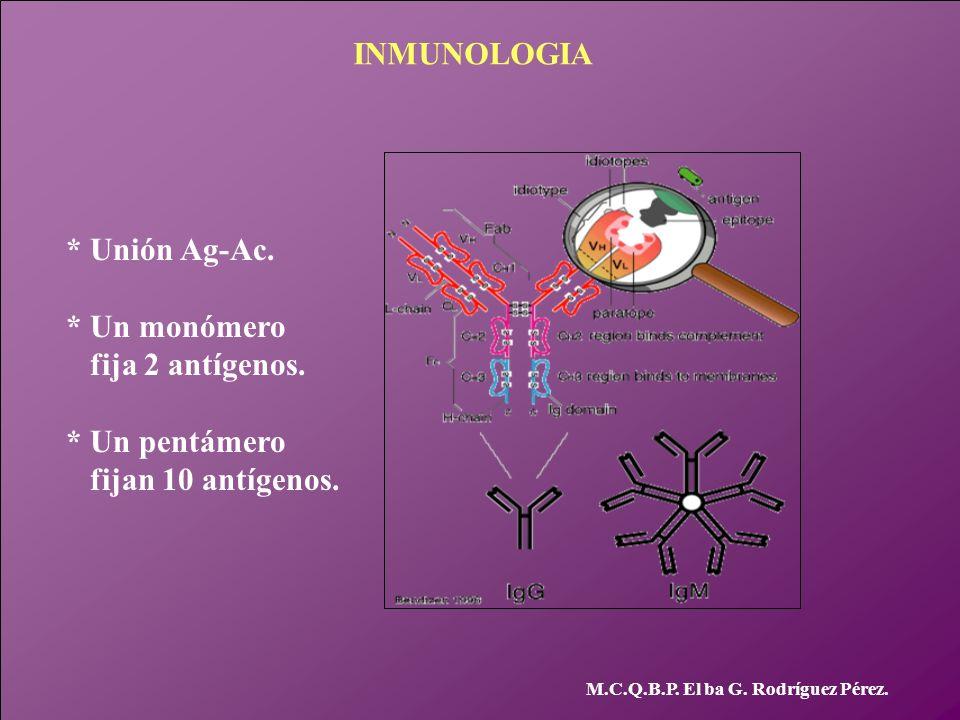 INMUNOLOGIA M.C.Q.B.P. El ba G. Rodríguez Pérez. * Unión Ag-Ac. * Un monómero fija 2 antígenos. * Un pentámero fijan 10 antígenos.