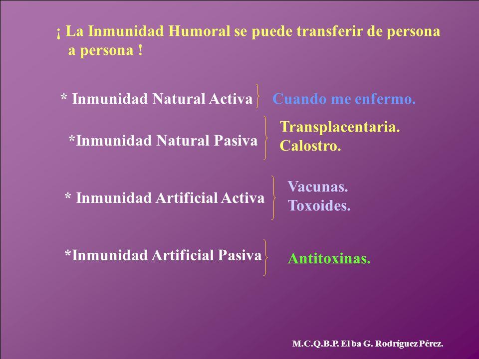 M.C.Q.B.P. El ba G. Rodríguez Pérez. ¡ La Inmunidad Humoral se puede transferir de persona a persona ! * Inmunidad Natural ActivaCuando me enfermo. *I