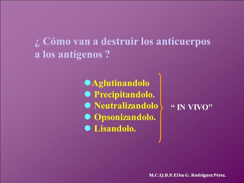 M.C.Q.B.P. El ba G. Rodríguez Pérez. ¿ Cómo van a destruir los anticuerpos a los antígenos ? Aglutinandolo Precipitandolo. Neutralizandolo Opsonizando