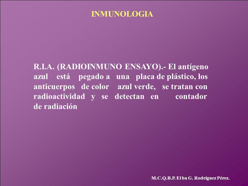 INMUNOLOGIA M.C.Q.B.P. El ba G. Rodríguez Pérez. R.I.A. (RADIOINMUNO ENSAYO).- El antígeno azul está pegado a una placa de plástico, los anticuerpos d