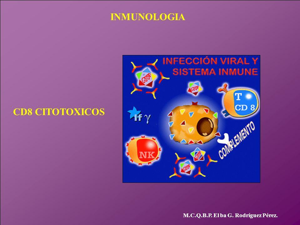 INMUNOLOGIA M.C.Q.B.P. El ba G. Rodríguez Pérez. CD8 CITOTOXICOS
