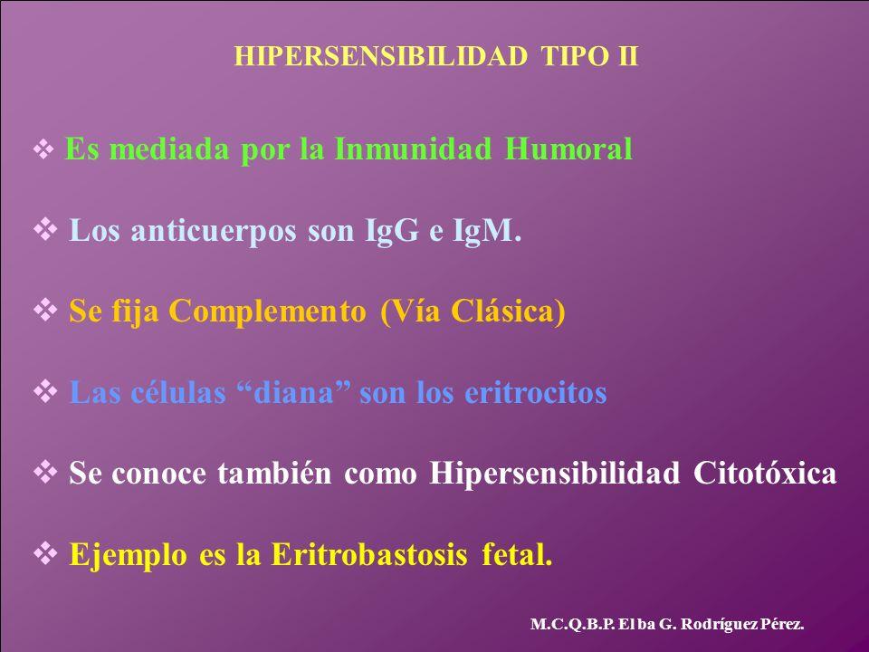 M.C.Q.B.P. El ba G. Rodríguez Pérez. HIPERSENSIBILIDAD TIPO II v Es mediada por la Inmunidad Humoral v Los anticuerpos son IgG e IgM. v Se fija Comple