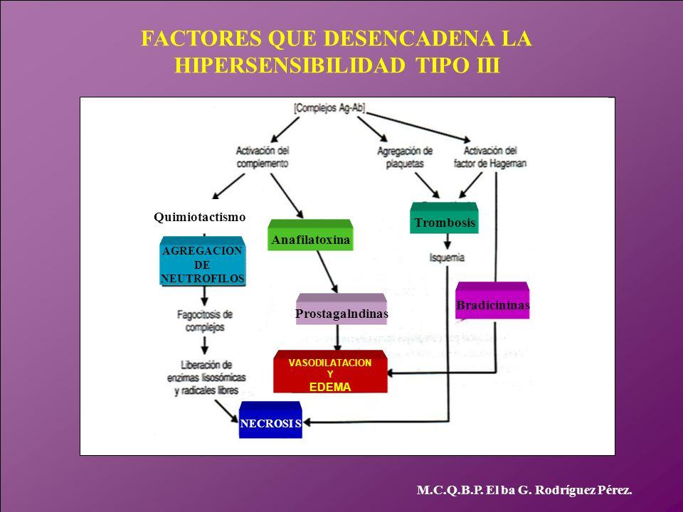 FACTORES QUE DESENCADENA LA HIPERSENSIBILIDAD TIPO III M.C.Q.B.P. El ba G. Rodríguez Pérez. AGREGACION DE NEUTROFILOS VASODILATACION Y EDEMA NECROSI S
