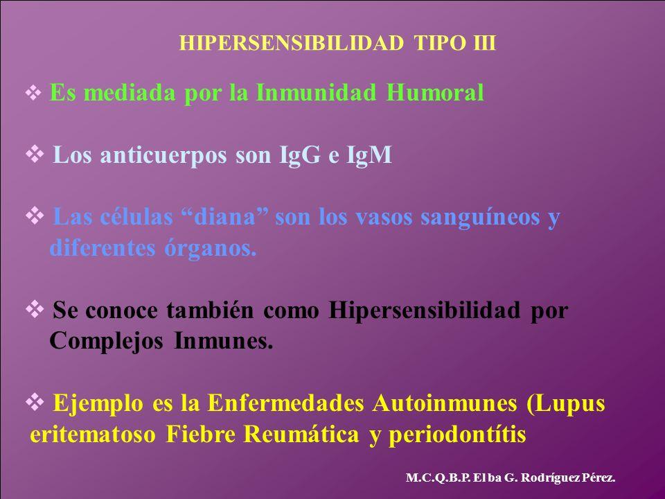 M.C.Q.B.P. El ba G. Rodríguez Pérez. HIPERSENSIBILIDAD TIPO III v Es mediada por la Inmunidad Humoral v Los anticuerpos son IgG e IgM v Las células di