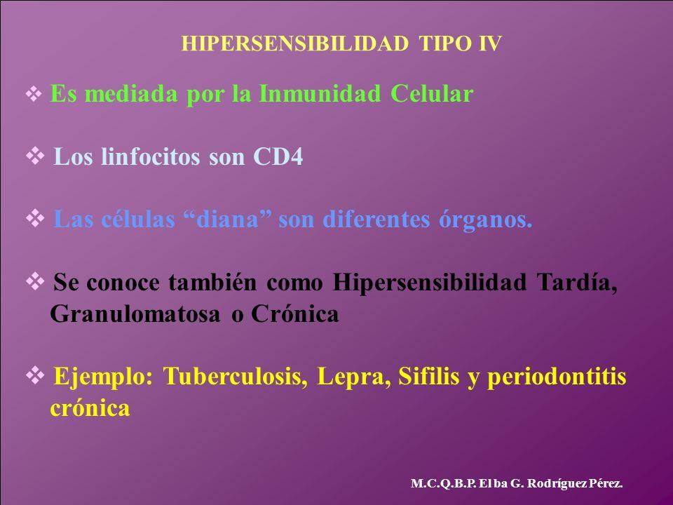 HIPERSENSIBILIDAD TIPO IV v Es mediada por la Inmunidad Celular v Los linfocitos son CD4 v Las células diana son diferentes órganos. v Se conoce tambi