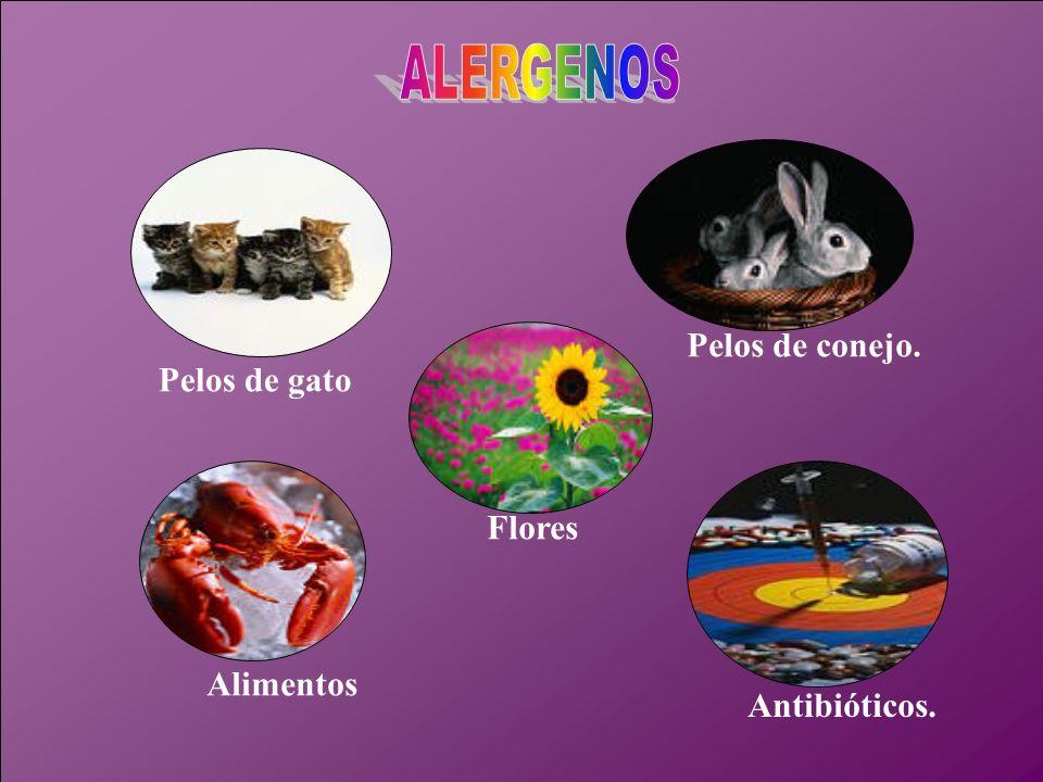 Alimentos Flores Antibióticos. Pelos de gato Pelos de conejo.