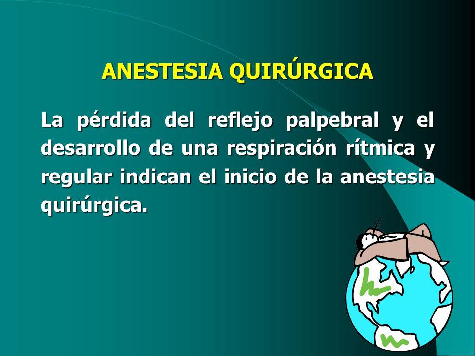 ANESTESIA QUIRÚRGICA La pérdida del reflejo palpebral y el desarrollo de una respiración rítmica y regular indican el inicio de la anestesia quirúrgic