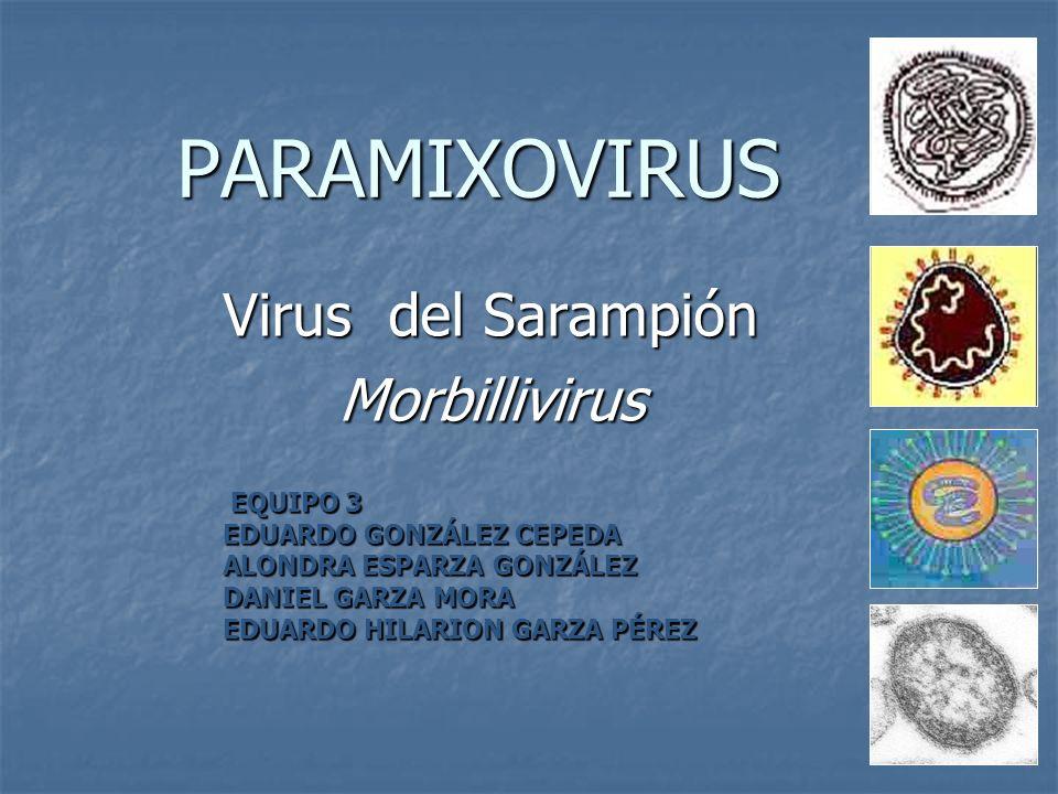 PARAMIXOVIRUS Virus del Sarampión Morbillivirus EQUIPO 3 EDUARDO GONZÁLEZ CEPEDA ALONDRA ESPARZA GONZÁLEZ DANIEL GARZA MORA EDUARDO HILARION GARZA PÉR