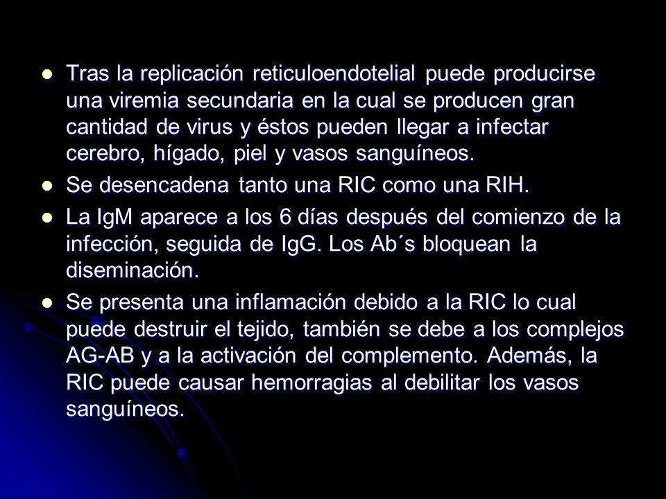 Tras la replicación reticuloendotelial puede producirse una viremia secundaria en la cual se producen gran cantidad de virus y éstos pueden llegar a i