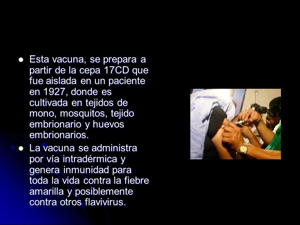 Esta vacuna, se prepara a partir de la cepa 17CD que fue aislada en un paciente en 1927, donde es cultivada en tejidos de mono, mosquitos, tejido embr