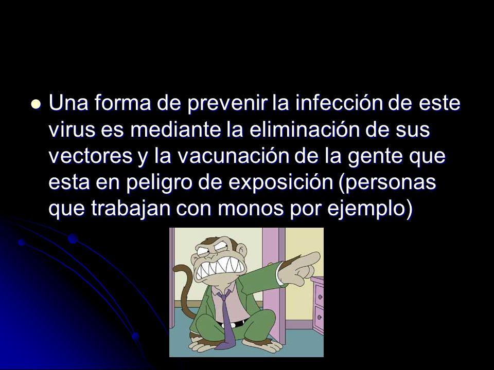 Una forma de prevenir la infección de este virus es mediante la eliminación de sus vectores y la vacunación de la gente que esta en peligro de exposic