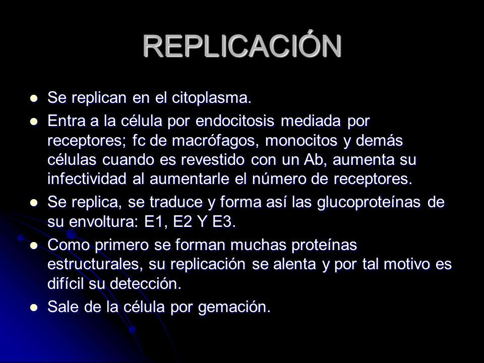 REPLICACIÓN Se replican en el citoplasma. Se replican en el citoplasma. Entra a la célula por endocitosis mediada por receptores; fc de macrófagos, mo