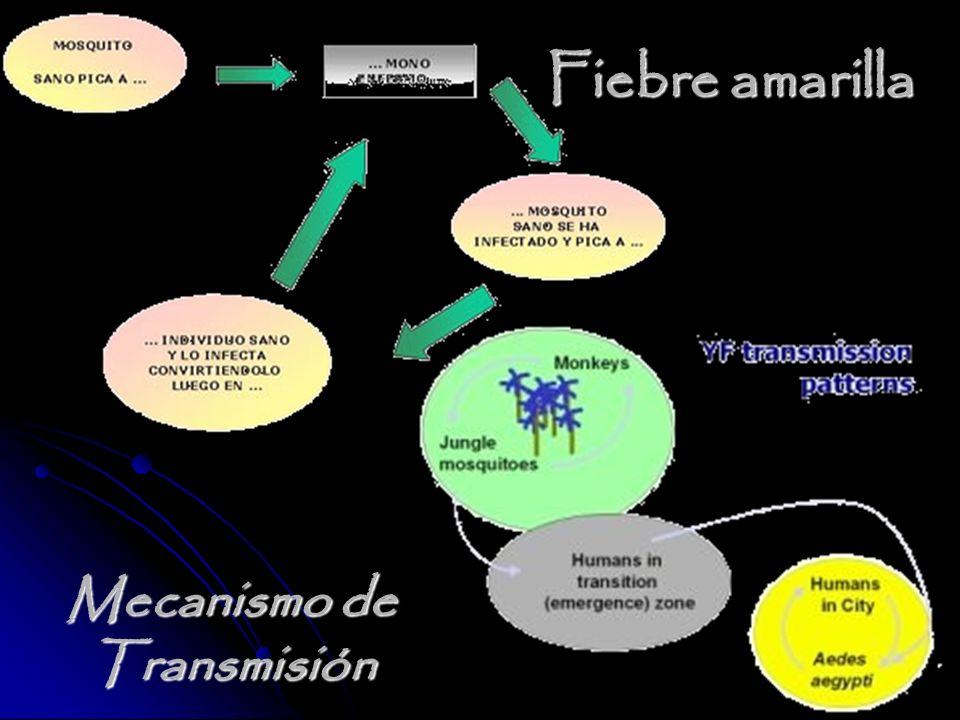 Mecanismo de Transmisión Fiebre amarilla