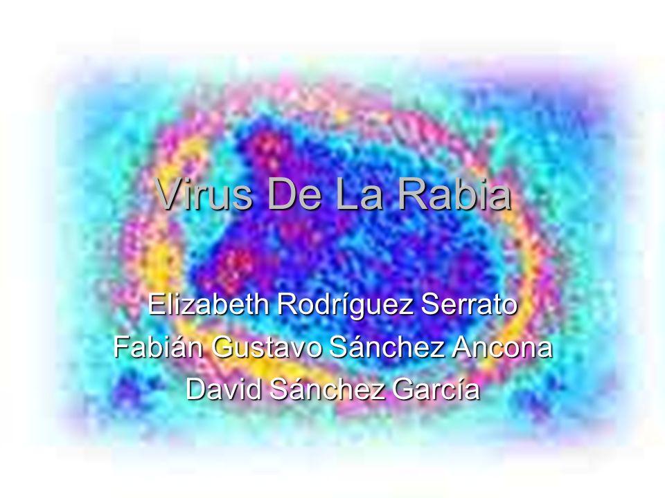 Virus De La Rabia Elizabeth Rodríguez Serrato Fabián Gustavo Sánchez Ancona David Sánchez García