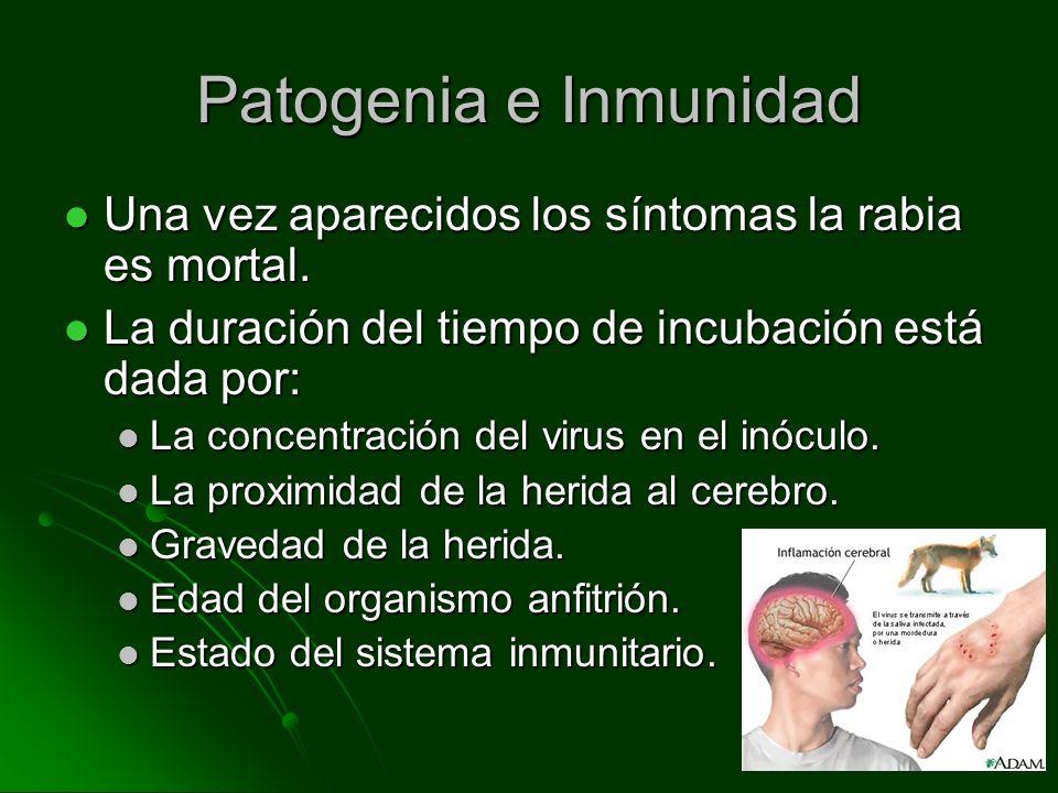 Patogenia e Inmunidad Una vez aparecidos los síntomas la rabia es mortal. Una vez aparecidos los síntomas la rabia es mortal. La duración del tiempo d