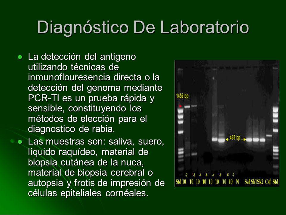 La detección del antigeno utilizando técnicas de inmunoflouresencia directa o la detección del genoma mediante PCR-TI es un prueba rápida y sensible,