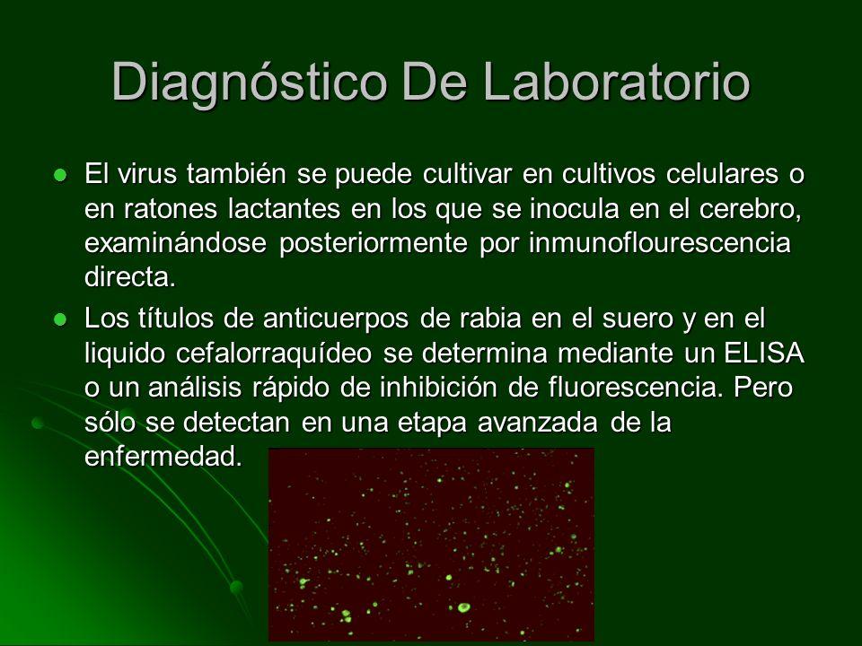 Diagnóstico De Laboratorio El virus también se puede cultivar en cultivos celulares o en ratones lactantes en los que se inocula en el cerebro, examin