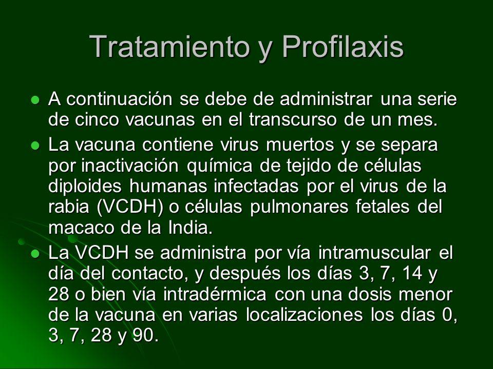 Tratamiento y Profilaxis A continuación se debe de administrar una serie de cinco vacunas en el transcurso de un mes. A continuación se debe de admini