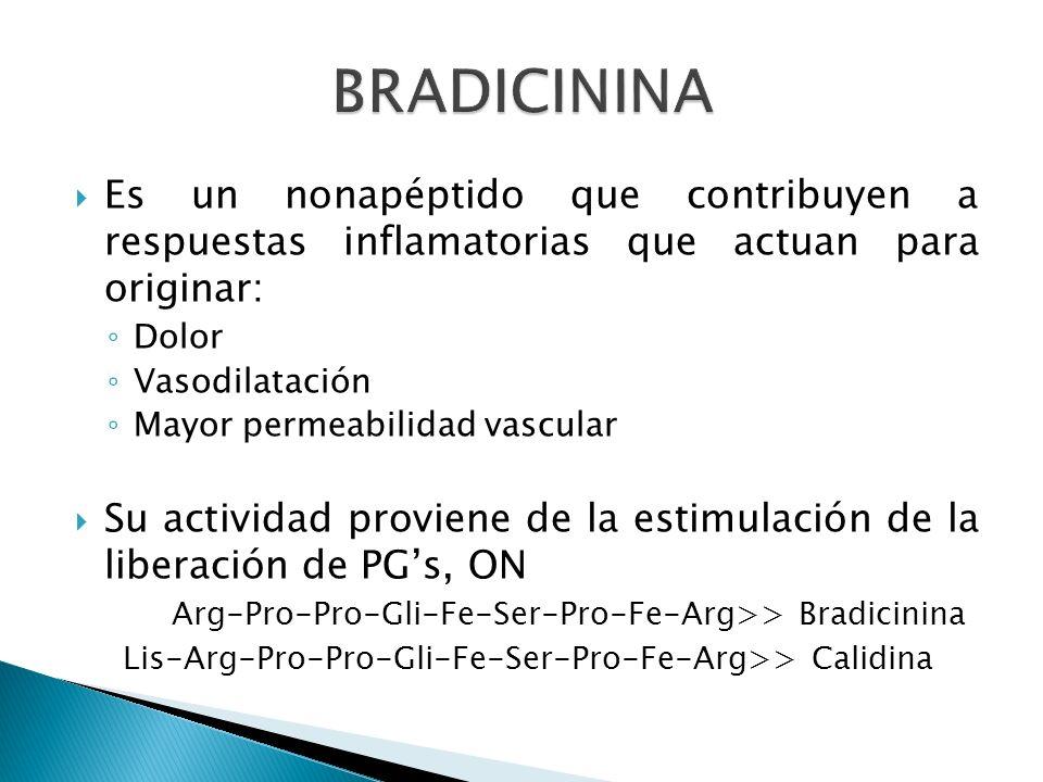 Es un nonapéptido que contribuyen a respuestas inflamatorias que actuan para originar: Dolor Vasodilatación Mayor permeabilidad vascular Su actividad