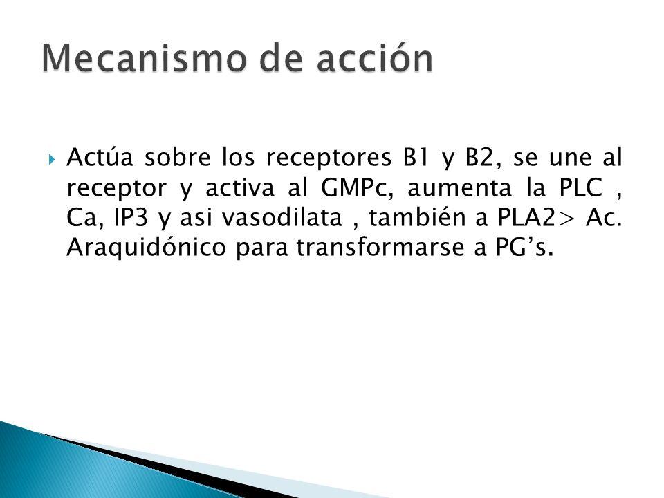 Actúa sobre los receptores B1 y B2, se une al receptor y activa al GMPc, aumenta la PLC, Ca, IP3 y asi vasodilata, también a PLA2> Ac. Araquidónico pa