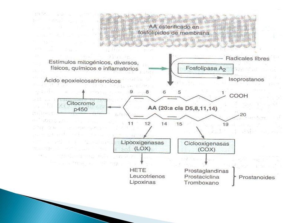 Antagonista selectivo de receptores LTC4,LTD4 Y LTE4.