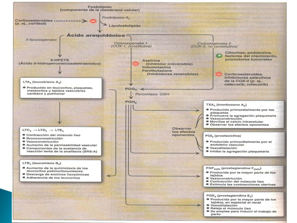 TipoReceptorFunción PGD 2 DP2 Vasodilatación Inhibe la agregación plaquetariaagregación plaquetaria PGE2 EP 1 Broncoconstricción Tracto gastrointestinal: contracción del músculo liso Tracto gastrointestinalmúsculo liso EP 2 Broncodilatador Tracto gastrointestinal: relaja el músculo liso Tracto gastrointestinal músculo liso Vasodilatación EP 3 Secreción ácida del estómagoestómago Secreción mucosa del estómago En embarazadas: contracción uterinauterina Contracción del músculo liso del estómago Inhibe la lipolisislipolisis autonómico neurotransmisoresautonómiconeurotransmisores Inespecíficos Hiperalgesia Pirógeno PGF 2α FP Contracción uterina Broncoconstricción