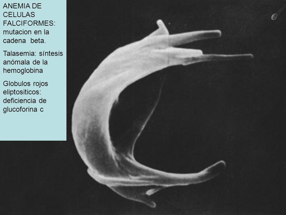 ANEMIA DE CELULAS FALCIFORMES: mutacion en la cadena beta. Talasemia: síntesis anómala de la hemoglobina Globulos rojos eliptositicos: deficiencia de
