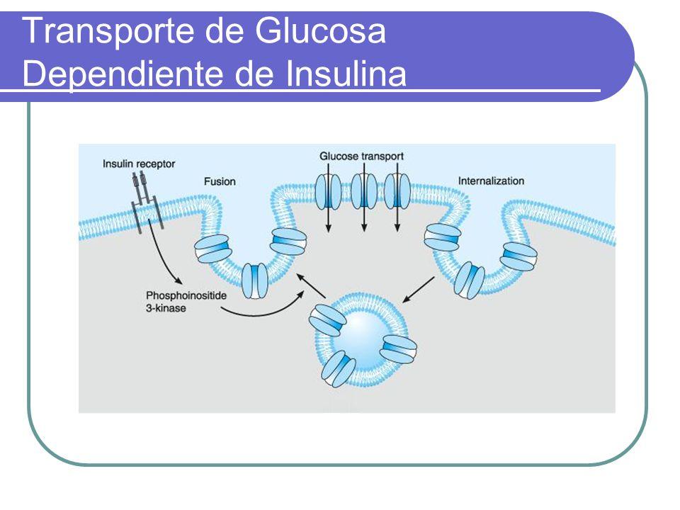 Transporte de Glucosa Dependiente de Insulina