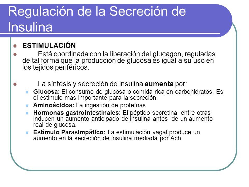 Regulación de la Secreción de Insulina ESTIMULACIÓN Está coordinada con la liberación del glucagon, reguladas de tal forma que la producción de glucos