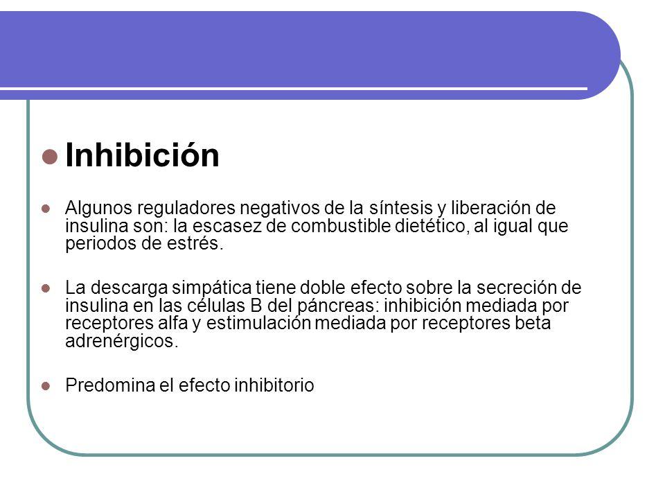 Inhibición Algunos reguladores negativos de la síntesis y liberación de insulina son: la escasez de combustible dietético, al igual que periodos de es