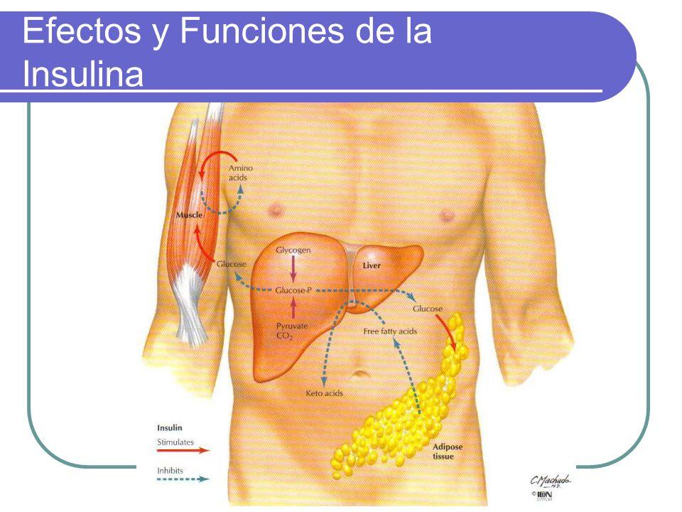Efectos y Funciones de la Insulina