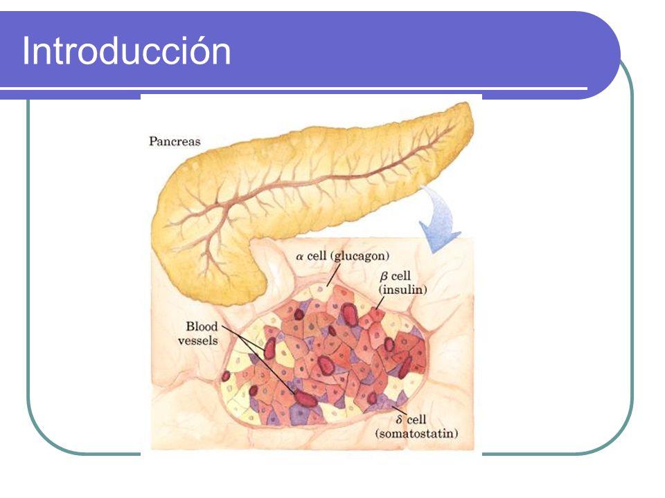 Degradación de Insulina Su vida media es de 5 a 6 minutos Se desintegra principalmente en hígado y riñón (Insulinasa) La vida media de la proinsulina es mayor a la de la insulina (17 minutos)