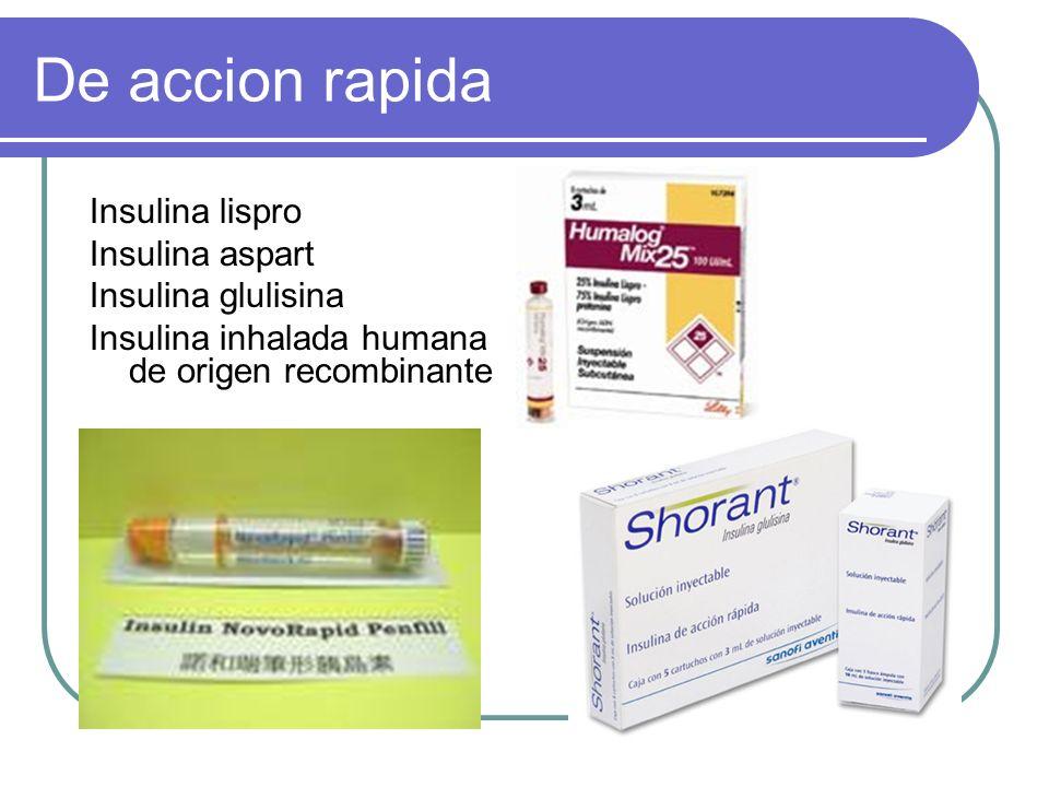 De accion rapida Insulina lispro Insulina aspart Insulina glulisina Insulina inhalada humana de origen recombinante