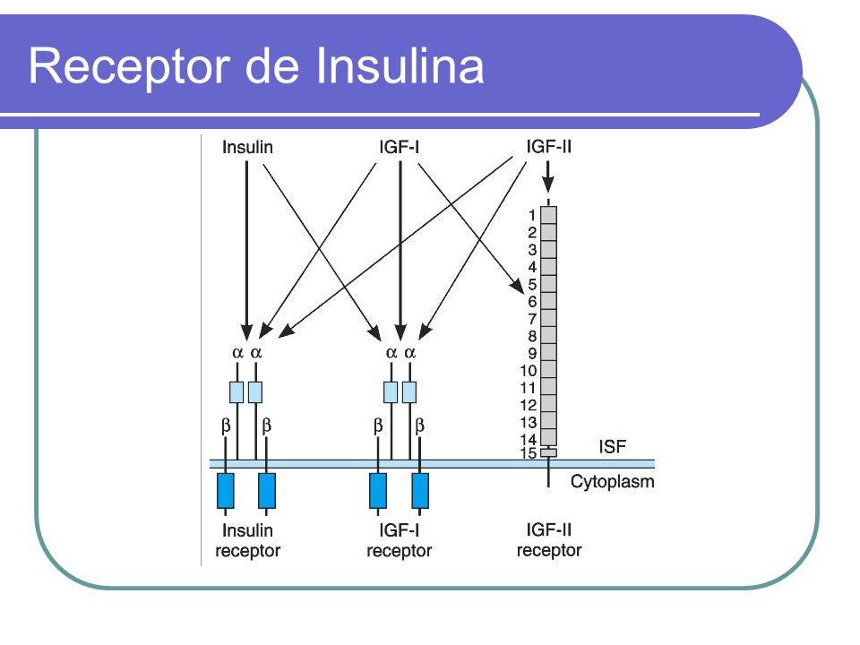 Insulina Glulisina administración subcutánea tiene un comienzo de acción más rápido y una menor duración de acción.