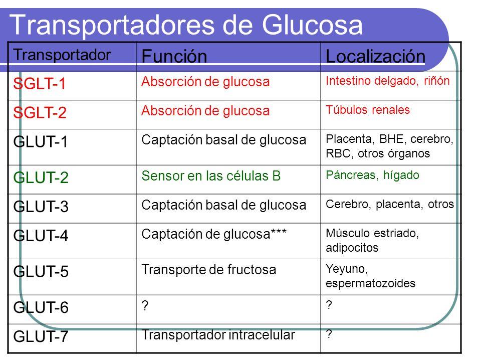 Transportadores de Glucosa Transportador FunciónLocalización SGLT-1 Absorción de glucosa Intestino delgado, riñón SGLT-2 Absorción de glucosa Túbulos