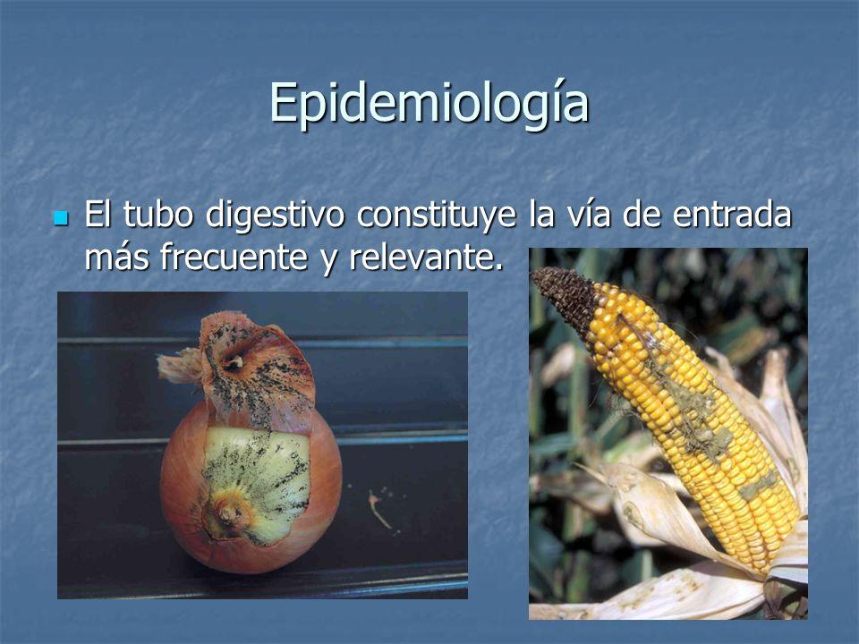 Epidemiología El tubo digestivo constituye la vía de entrada más frecuente y relevante. El tubo digestivo constituye la vía de entrada más frecuente y
