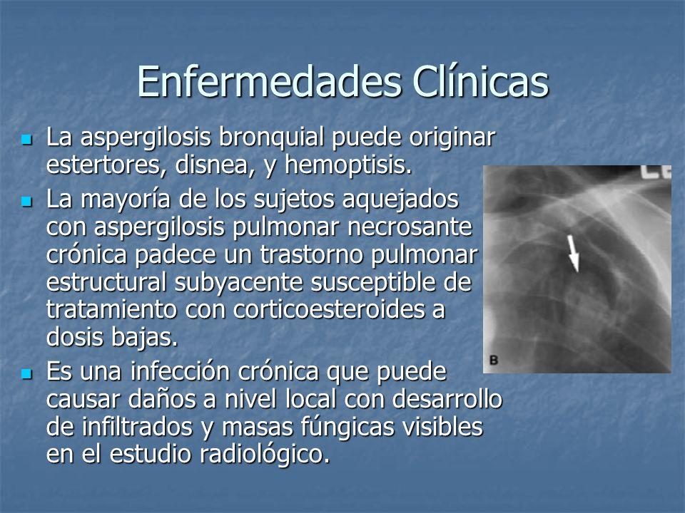 Enfermedades Clínicas La aspergilosis bronquial puede originar estertores, disnea, y hemoptisis. La aspergilosis bronquial puede originar estertores,