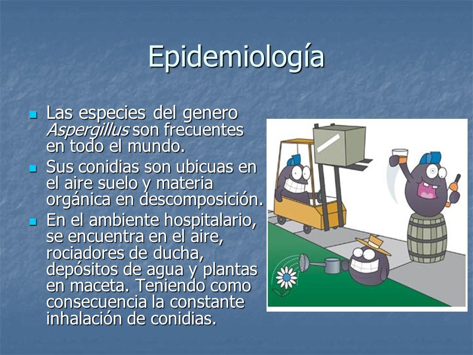 Epidemiología Las especies del genero Aspergillus son frecuentes en todo el mundo. Las especies del genero Aspergillus son frecuentes en todo el mundo