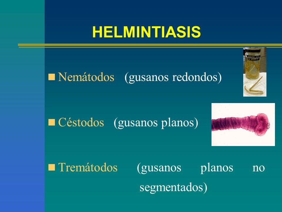 Nemátodos (gusanos redondos) Céstodos (gusanos planos) Tremátodos (gusanos planos no segmentados)