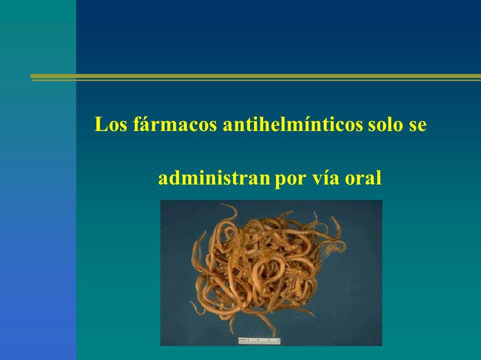 Los fármacos antihelmínticos solo se administran por vía oral
