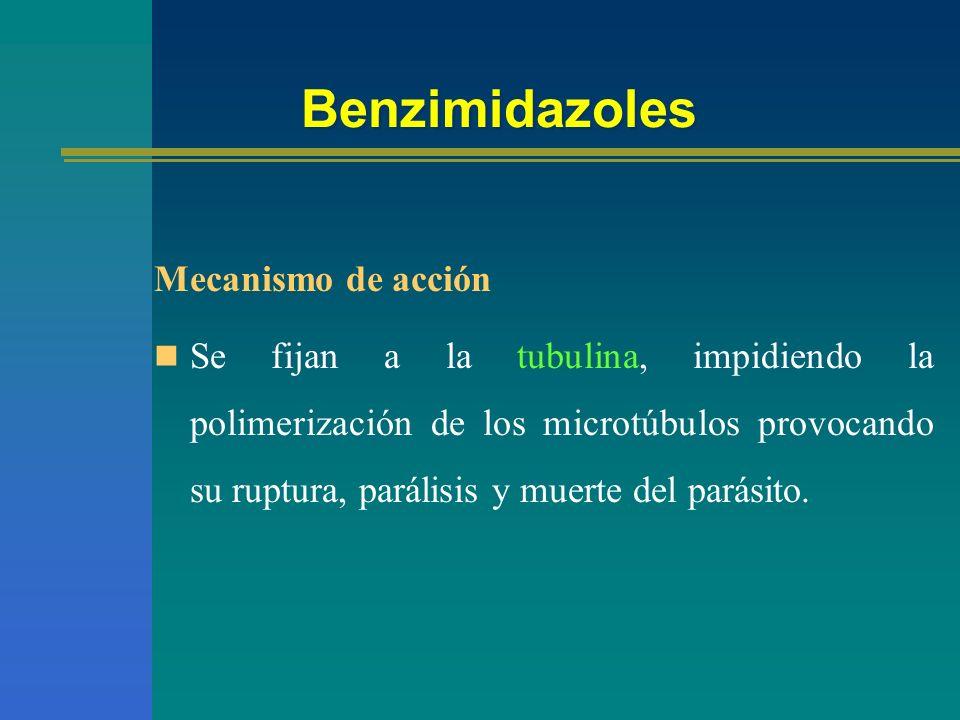 Benzimidazoles Mecanismo de acción Se fijan a la tubulina, impidiendo la polimerización de los microtúbulos provocando su ruptura, parálisis y muerte