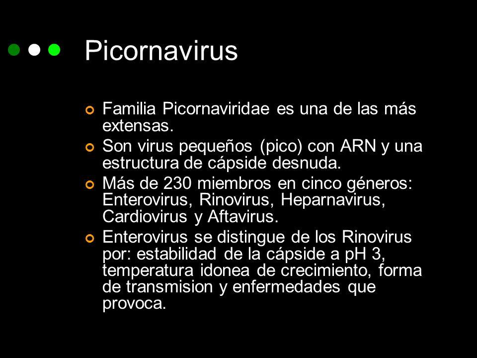 Picornavirus Familia Picornaviridae es una de las más extensas. Son virus pequeños (pico) con ARN y una estructura de cápside desnuda. Más de 230 miem