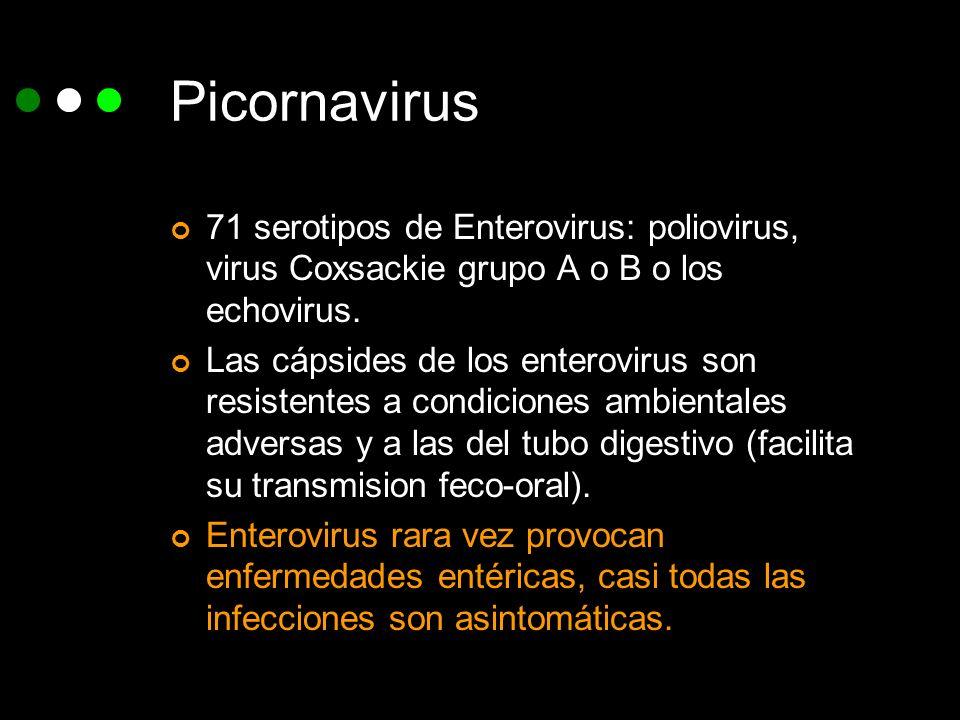 Picornavirus 71 serotipos de Enterovirus: poliovirus, virus Coxsackie grupo A o B o los echovirus. Las cápsides de los enterovirus son resistentes a c