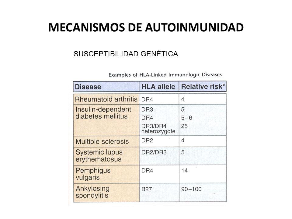 MECANISMOS DE AUTOINMUNIDAD FACTORES AMBIENTALES (INFECCIONES ) MIMETISMO MOLECULAR ANTIGENOS MICROBIANOS Microbio y hospedero comparten determinantes antigénicos Microorganismo estimula SI dispara respuestas antilo propio Det.