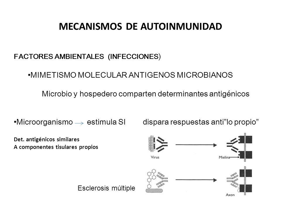 PATÓGENOS PERSISTENTES Infecciones por Estreptococo Fiebre reumática Forman anticuerpos que reaccionan contra proteinas del musculo corazón (Miocardio) y otros componentes tisulares propios PERSISTENCIA DEL ANTIGENO artritis post-infecciosas ( hepatitis B aguda Wands, 1975).